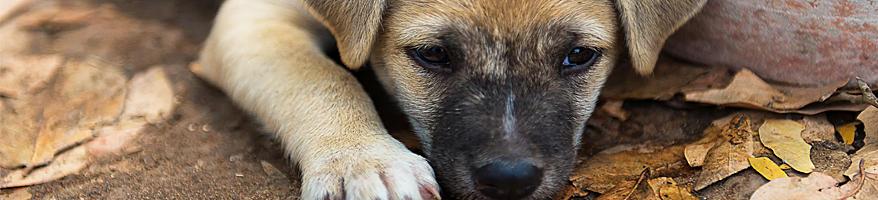 Pets & Stray Animal Hero